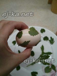 На каждое яйцо нужно прилепить влажные листочки