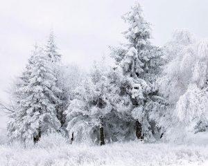 снег на новый год 2016