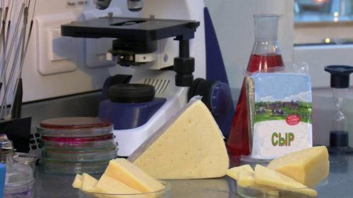 проверка сыра в лаборатории