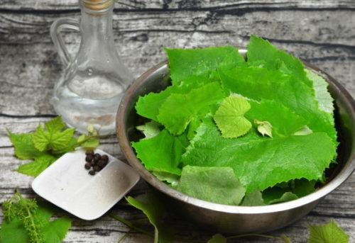 ingredienty-dlja-zasolki-listjev