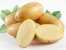 Миниатюра к статье История и польза картофеля